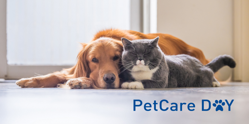 PetCare Day Cd Insurace